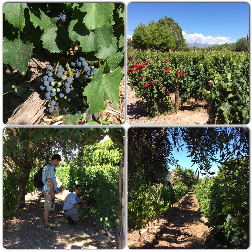 Luján de Cuyo was quaint and picturesque with mountains, vineyards, and swaying palm trees.