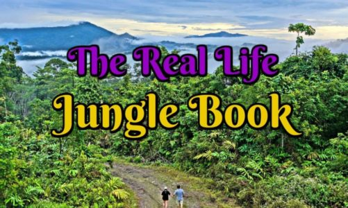 Borneo Rainforest Lodge in Sabah is the Best Wildlife Resort in the World