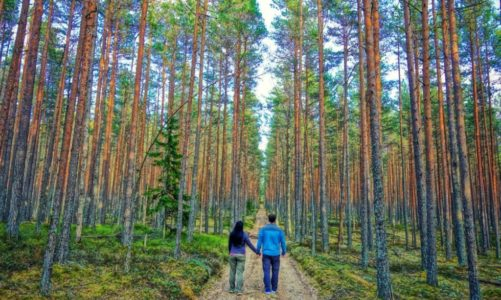 Best Day Trips From Tallinn Estonia for Nature & Adventure Lovers