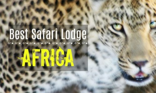This Is the Best Safari in South Africa and Best Value For the Money