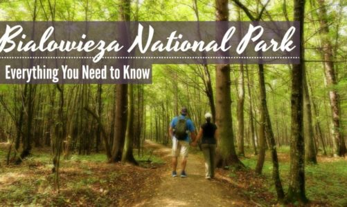Visit Bialowieza Forest | Best Things to Do, Travel Guide & Itinerary