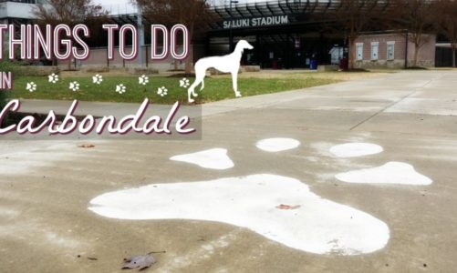 Carbondale Illinois   Best Things to Do Near Shawnee National Forest!