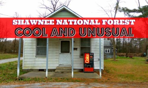 Shawnee Forest Illinois   Cool and Unusual Things to See and Do